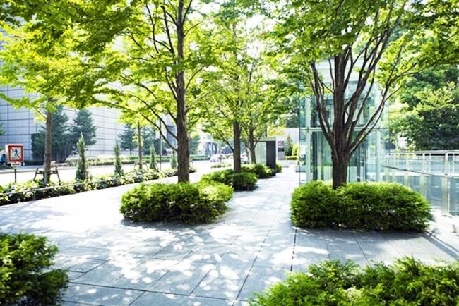 suzuki_trees_650
