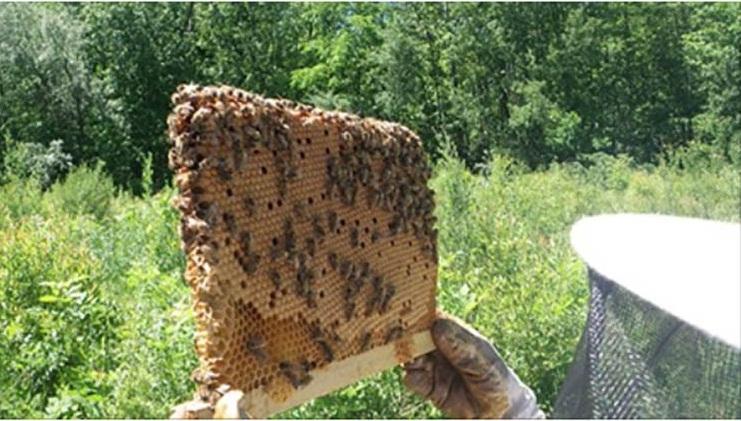 bee resurgence
