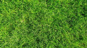 Scientists unlock 'Green' Energy from Garden Grass