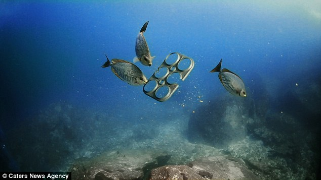 Edible Ring binders for Beer cans could save Marine Life